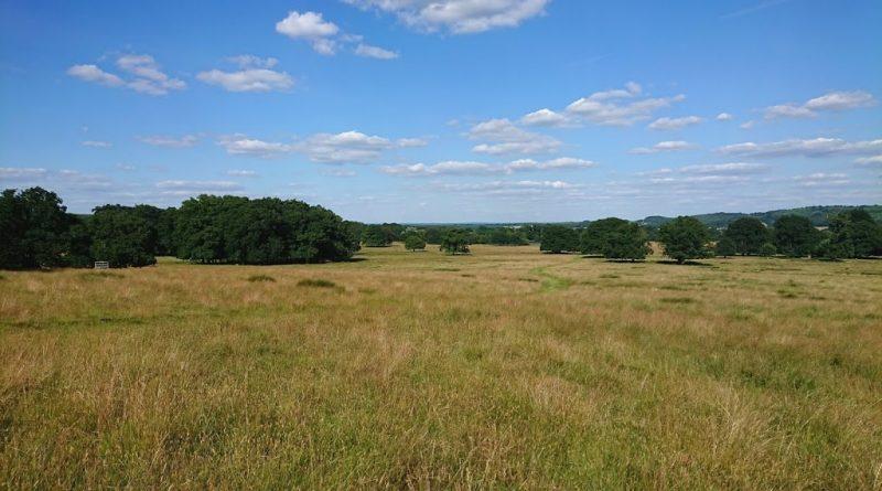 Petworth Park – 4 mile walk